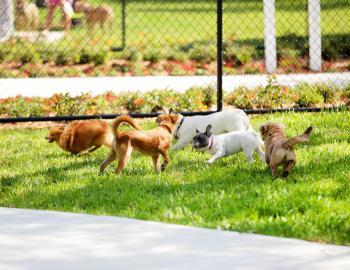 Empie Dog Park