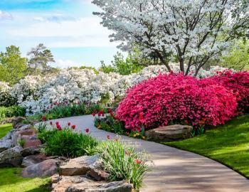 garden walkway with azalea bush