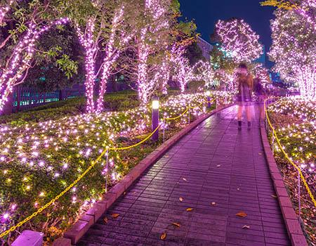 Trees decorated in lights in a garden