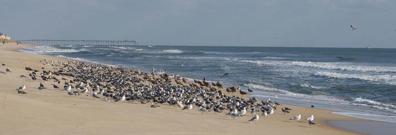 Beautiful view of Carolina Beach in North Carolina