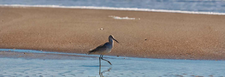 Bird on the beach at Wrightsville Beach