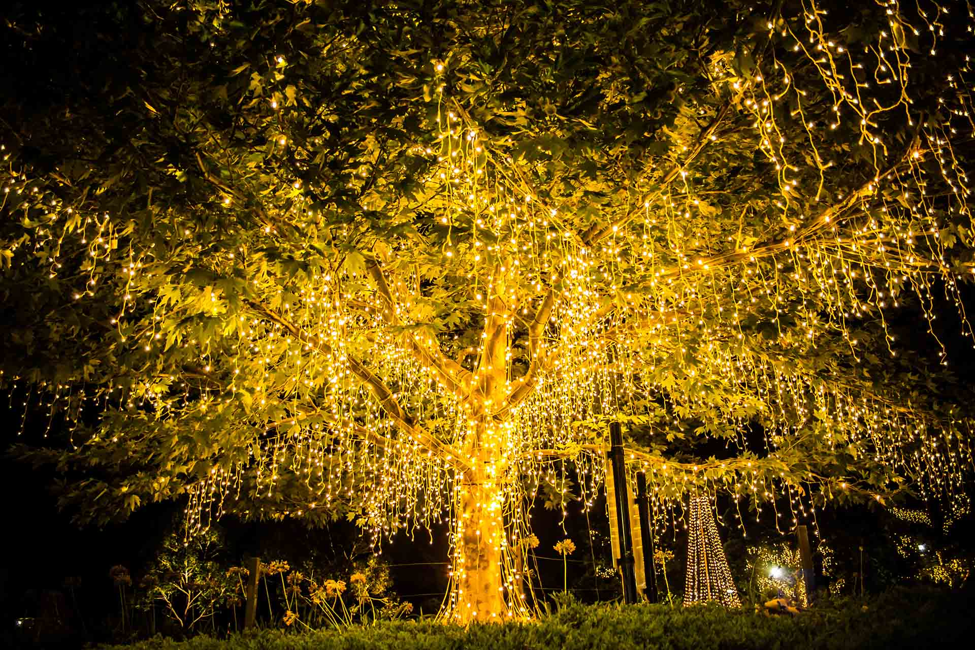Beautiful tree covered in lights